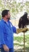 UC Davis Raptor Center Comes to Vacaville's Peña Adobe Par